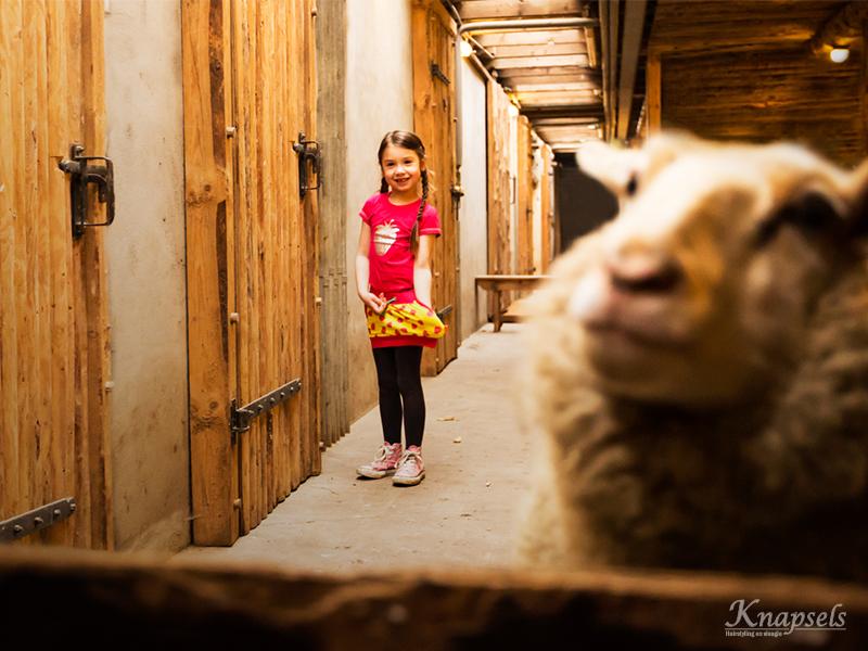 Knapsels-fotoshoot-koeenboe-sheep